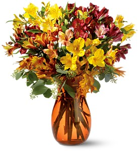 alstroemeria brights tf web61