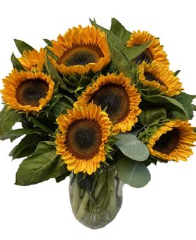 simply-sunflowers