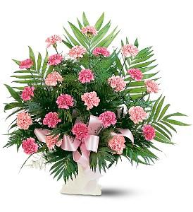 Classic_Carnation.jpg
