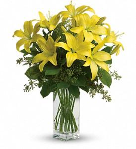 Lily_Sunshine_Yellow.jpg